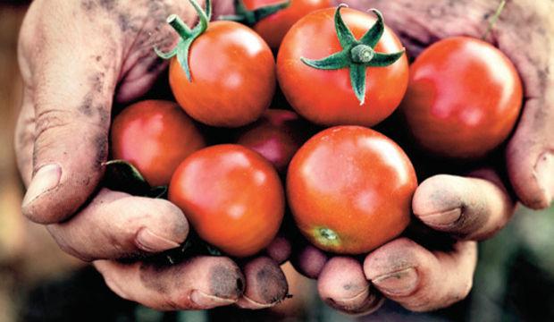 Organik ürün nereden alınır?